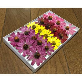 ジニア祭りで100円お値引き‼️M⑤銀の紫陽花が秋冬におすすめしたい大人色ジニア(ドライフラワー)