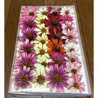 ジニア祭りで100円お値引き‼️M①銀の紫陽花が秋冬におすすめしたい大人色ジニア(ドライフラワー)