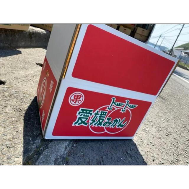 愛媛県産 極早生みかん 小玉前後 傷スレあり 10kg 食品/飲料/酒の食品(フルーツ)の商品写真