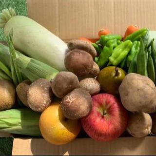 ★60サイズ★ 無農薬新鮮野菜果物セット 10種類セット