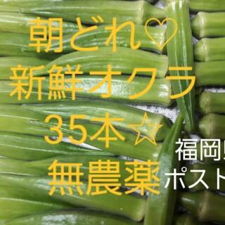 【無農薬】オクラ35本 ポスト投函