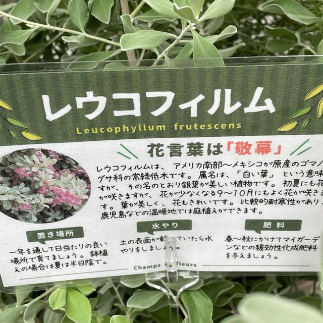 レイコフィラム ハンドメイドのフラワー/ガーデン(プランター)の商品写真
