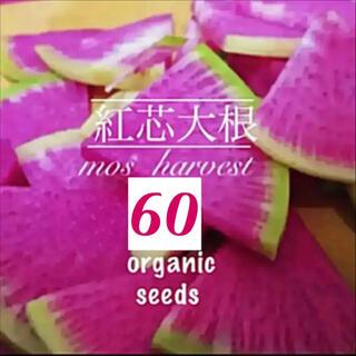 【秋蒔き適期】◆紅芯大根◆ 伝統中国野菜◆【固定種有機種子 60粒】(その他)