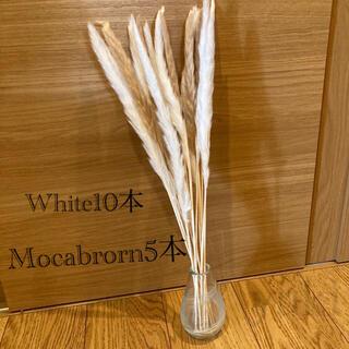 パンパスグラス ドライフラワー テールリード 白10本モカブラウン5本(ドライフラワー)