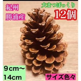 【希少レア】紀州勝浦産の大玉まつぼっくり大きさ色々なミックスセット12個です!