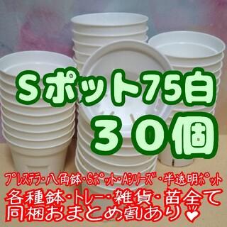 Sポット75 白 30個 2.5号 丸型 スリット鉢 プレステラ多肉植物 プラ鉢(プランター)