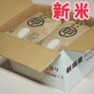 新米 令和3年度産 新潟こしひかり 20kg(5kg×4袋) 特別栽培米
