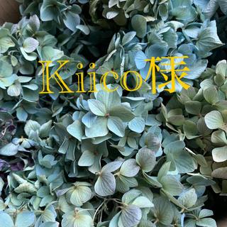 kiico様専用 紫陽花ドライフラワー、カワラハハコ(ドライフラワー)