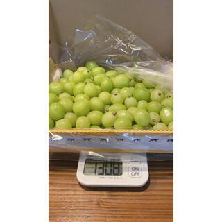 山梨県産 新鮮 美味しい シャインマスカット たっぷり1kg以上入っています!!