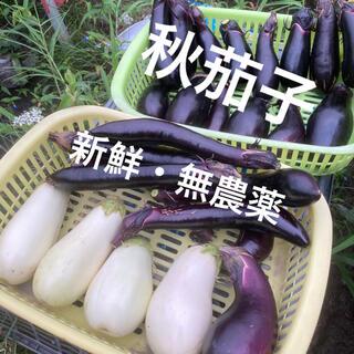 【秋茄子】新鮮 無農薬 秋茄子の詰め合わせ 専用BOXに詰められるだけ (野菜)