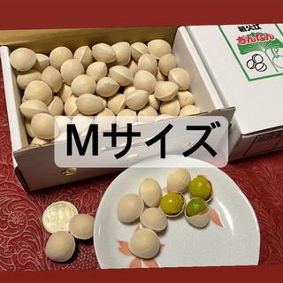 名産地愛知県稲沢市祖父江銀杏 Mサイズ