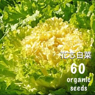 ◆花芯白菜◆ブーケのような美しく柔らかな美味しい白菜◆【固定種有機種子 60粒】(その他)