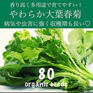 ◆やわらか大葉春菊◆育てやすく肉厚で美味しい♡◆【固定種有機種子 80粒】(その他)