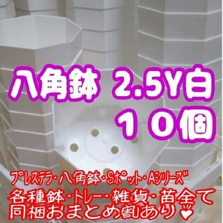 プラ八角鉢 カネヤ【2.5Y】10個 多肉植物 プレステラ(プランター)