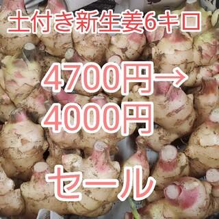土付き新生姜6キロ 感謝セール品(野菜)
