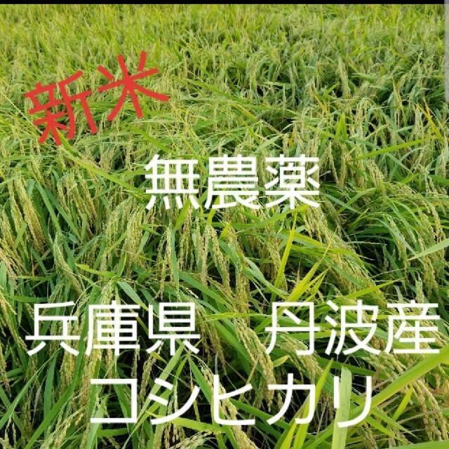 令和3年 兵庫県丹波産 無農薬コシヒカリ10キロ 食品/飲料/酒の食品(米/穀物)の商品写真
