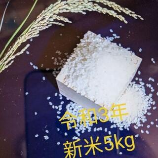 【令和3年度産 新米5kg】農家のコシヒカリ