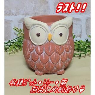 【ふくろうポットL:オレンジ】植木鉢 プランター 多肉植物 プレステラ プラ鉢(プランター)