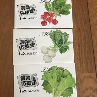 ラディッシュ 小かぶ 種(野菜)