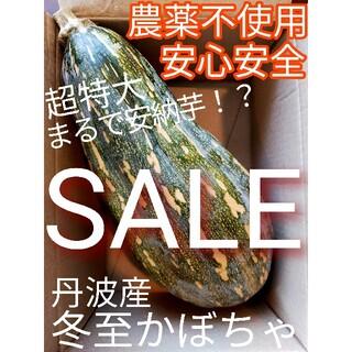 安心安全 完全無農薬 兵庫県丹波産 ほっくほく めちゃ甘  かぼちゃ 詰め合わせ(野菜)