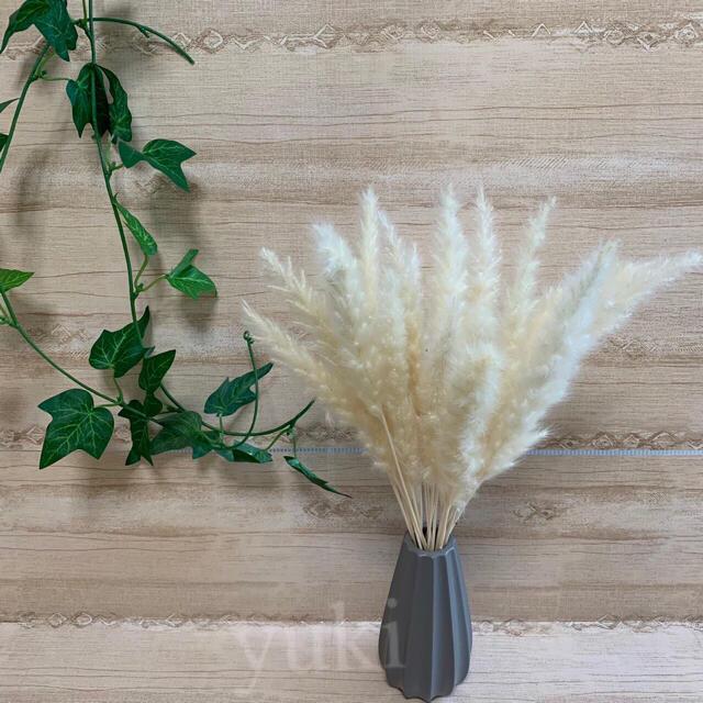 パンパスグラス ドライフラワー テールリード 白 20本セット [ミニ] ハンドメイドのフラワー/ガーデン(ドライフラワー)の商品写真