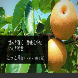 にっこり梨 3㎏ (7~8個入)(フルーツ)