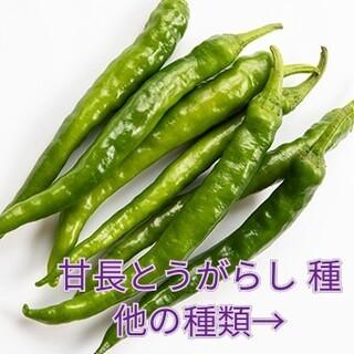 野菜種☆甘長とうがらし☆変更→パプリカ 春菊 芽キャベツ 丸オクラ わさび菜(野菜)