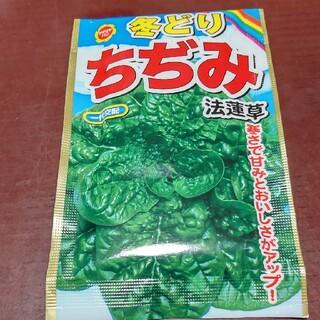ちぢみ法蓮草 種 100粒(野菜)