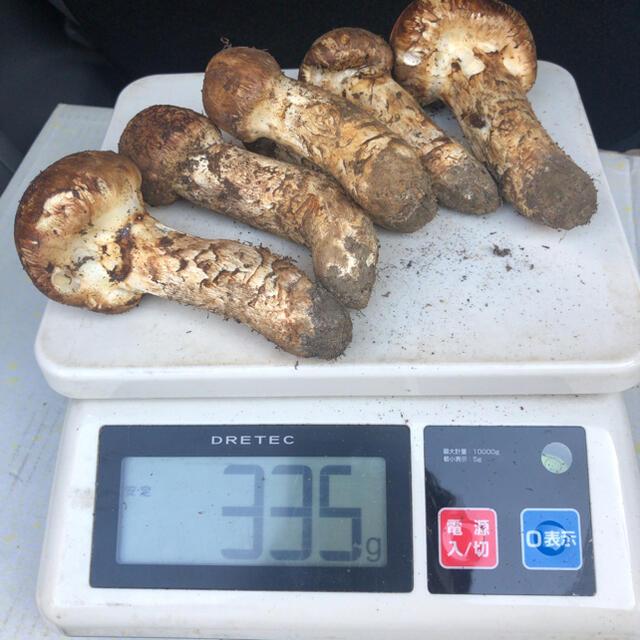 朝採れたて 岩手産 松茸 ツボミ 食品/飲料/酒の食品(野菜)の商品写真