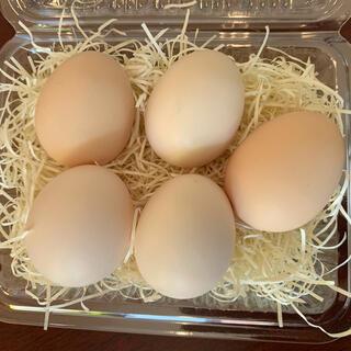 チャボの有精卵5個 おまけあり