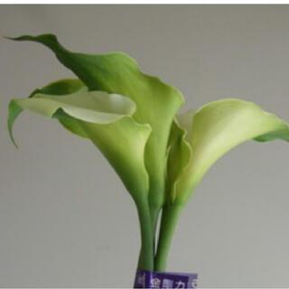 専用!くるりとまいた白い花弁がとても優雅カラー✣グリーンゴッデス緑の女神 (プランター)