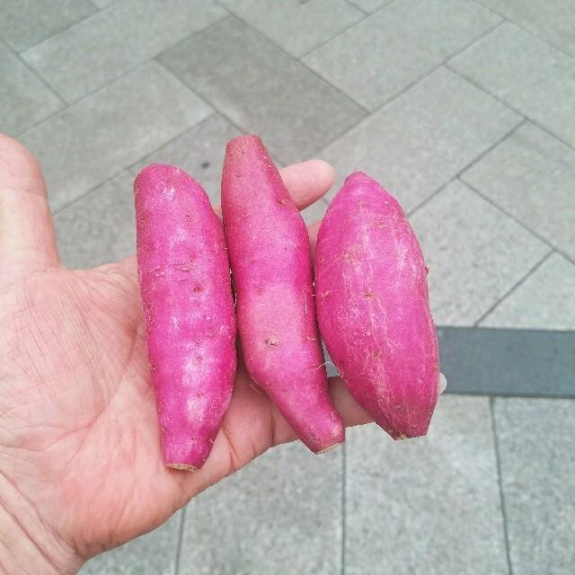 宮崎のさつまいも☆新物 ☆宮崎紅約30個前後 食品/飲料/酒の食品(野菜)の商品写真