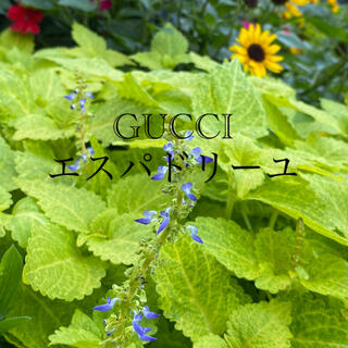 グッチ(Gucci)のGUCCIエスパドリーユ♡お花の刺繍(スリッポン/モカシン)