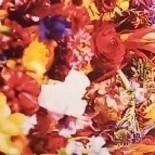 アルビオン(ALBION)の☆★くう様専用★☆ アルビオン コーセー サンプル(サンプル/トライアルキット)