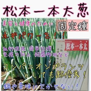 松本一本太葱 固定種 家庭菜園 種子 種 野菜の種 コンパニオンプランツ(野菜)