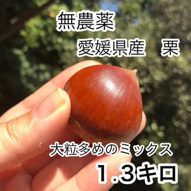 愛媛県 栗 無農薬 食品/飲料/酒の食品(野菜)の商品写真