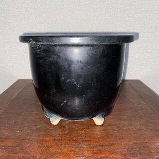 盆栽鉢 黒 丸鉢 蘭鉢 深鉢 三つ足 富貴蘭 鉢 植木鉢(その他)