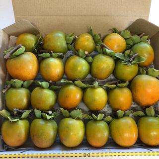 【採りたて】無農薬 渋柿 約1㎏ 信州産 干し柿用(フルーツ)