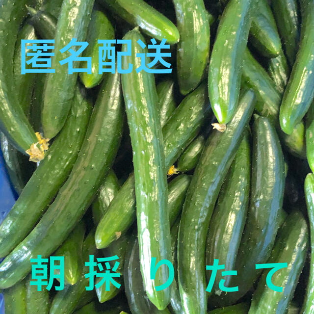 朝採り新鮮きゅうり5キロC品です。新鮮です 食品/飲料/酒の食品(野菜)の商品写真