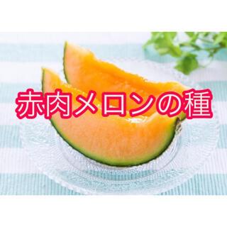 とても甘い!メロンの種(野菜)