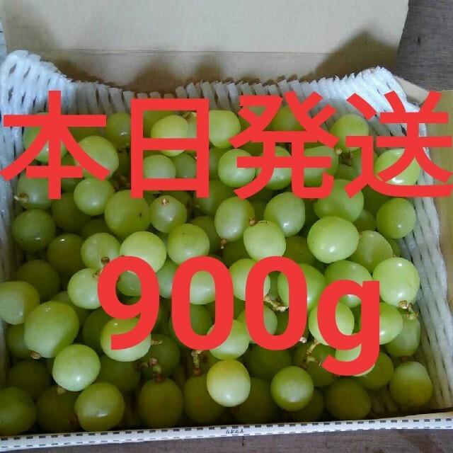 【訳あり】シャインマスカット粒のみ 約900g 食品/飲料/酒の食品(フルーツ)の商品写真