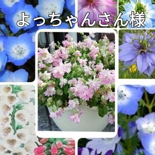 ♥️花の種 シレネピーチブロッサム ネモフィラ2種 ジキタリス ニゲラ