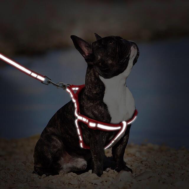犬用 夜も安心!Sサイズ蛍光 反射板 小型犬 犬 ハーネス & リードセット その他のペット用品(犬)の商品写真