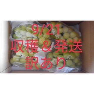 【訳あり】シャインマスカット 約2kg