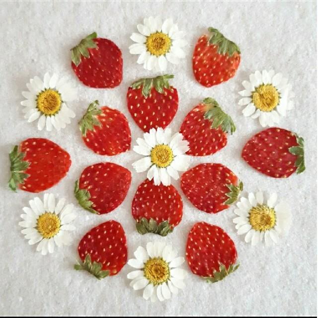 押しフルーツ ミニいちごセット ハンドメイドの素材/材料(各種パーツ)の商品写真