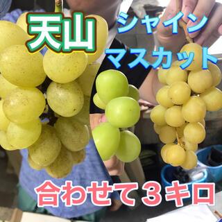 meguchihiro様専用シャインマスカットと天山家庭用7キロ 章わんぱく農園(フルーツ)