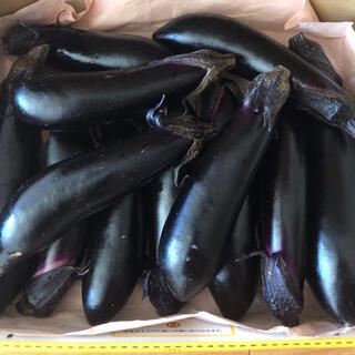 茄子約1キロ(野菜)