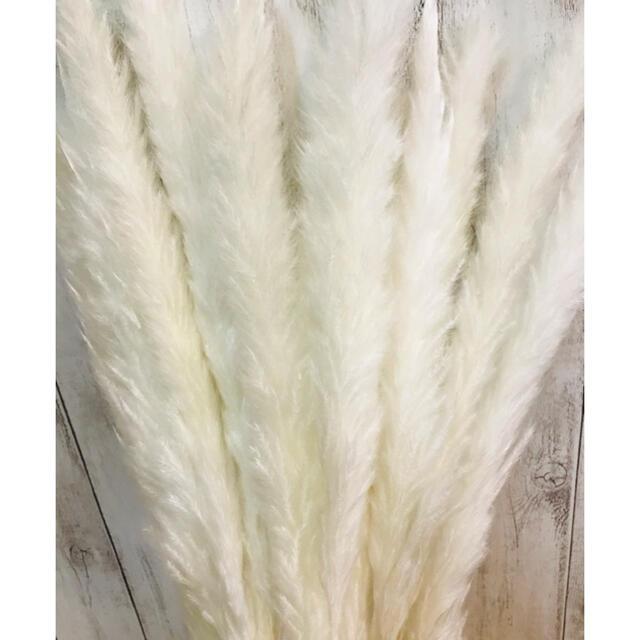 ドライフラワーインテリアパンパスグラス20本テールリードスワッグ花材結婚仕式 ハンドメイドのフラワー/ガーデン(ドライフラワー)の商品写真