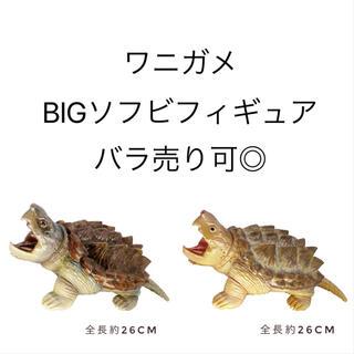 ワニガメ☆BIGソフビフィギュアセット