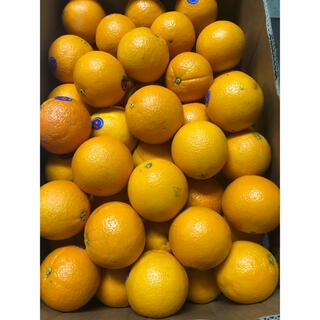 オーストラリア産ネーブルオレンジ 訳あり箱込み約10kg(フルーツ)